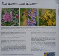 Infotafel Bienenweide